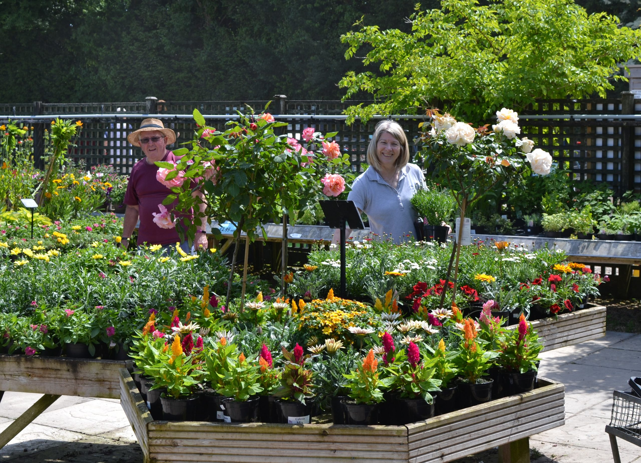 Plant Sale and Summer Fayre coming soon ….