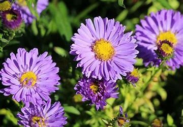 Wide range of Shrubs, Perennials, Grasses , Climbers and much more available