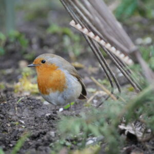 Planting Guides for Wildlife